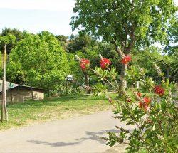 nature et vegetation Camping Les Amandiers