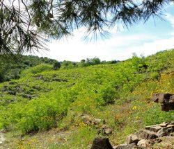 paysage vegetation Camping Les Amandiers