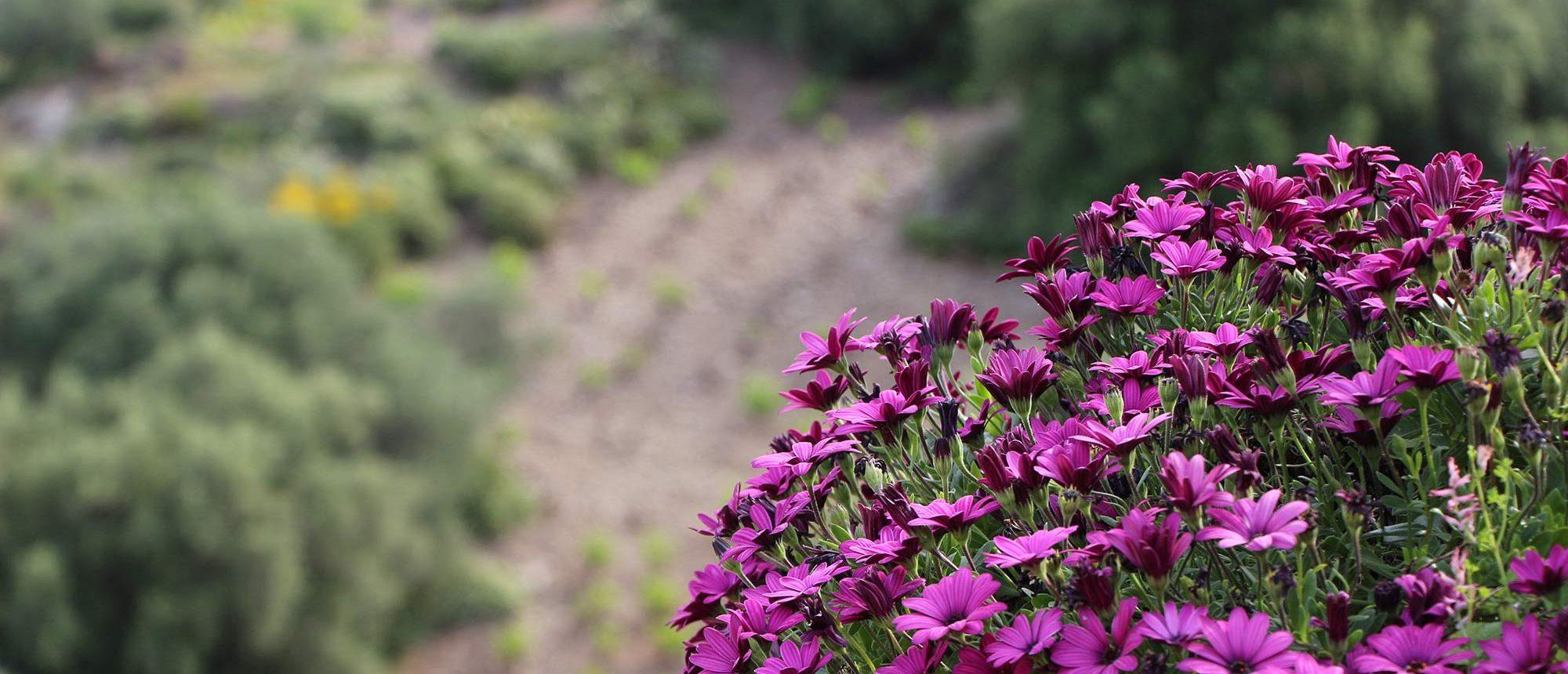 Vegetation fleurs Camping Les Amandiers