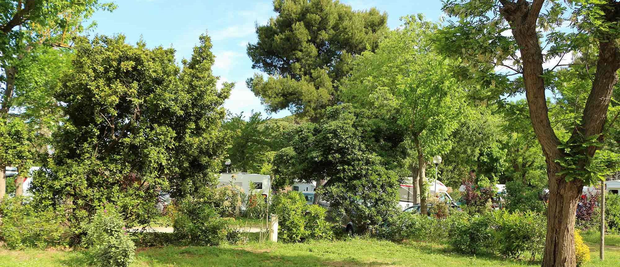 Vegetation Camping Les Amandiers